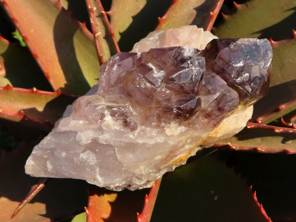 Natural Smokey Amethyst Quartz In Matrix x 2 from Namibia
