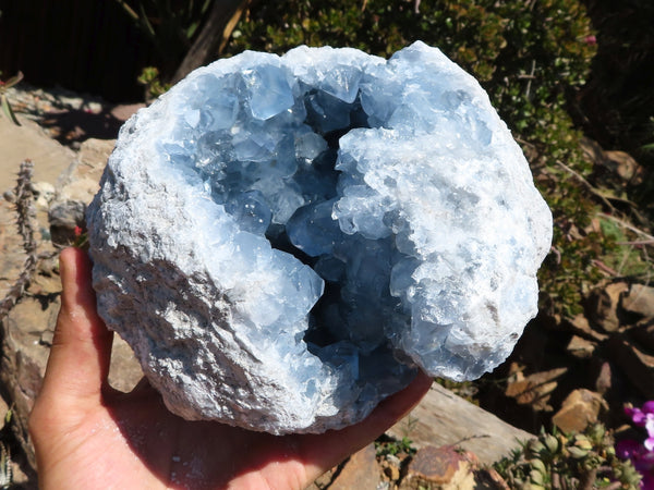 Natural XL A Grade Celestite Crystal Geode x 1 from Sakoany, Madagascar