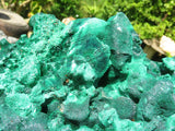 Natural Exceptional XL Silky Malachite x 1 from Kasompe, Congo