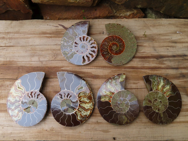 Polished Cut & Polished Ammonite Fossil Pairs x Pairs x 3 From Tulear, Madagascar