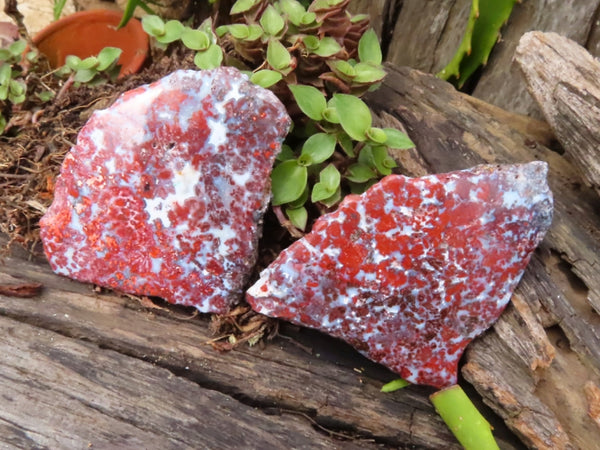 Polished One Side Red Flower Jasper Slices x 24 from Skeleton Coast, Namibia