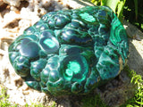Polished Malachite Freeforms x 2 from Congo