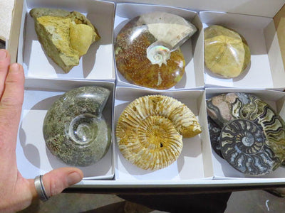 Polished & Natural mixed Fossils x 6 from Madagascar - TopRock