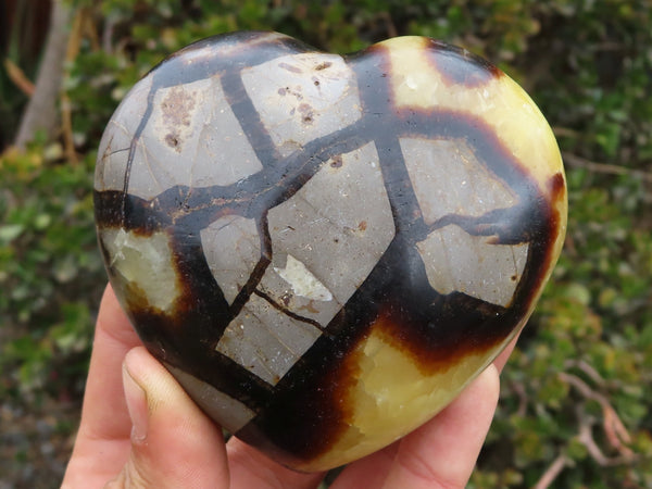 Polished Medium Septerye Hearts x 6 from Madagascar