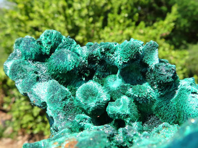Natural XL Silky Malachite Specimens x 2 from Kasompe, Congo