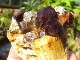 Natural Medium Pyrope Garnet Crystals & Specimens x 12 from Madagascar