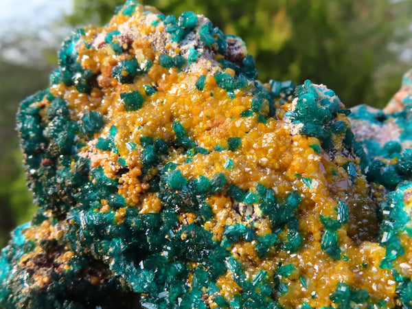 Natural XXL Dioptase With Yellow Wulfenite Shiny Emerald Green Crystal x 1 from Brazzaville, Congo