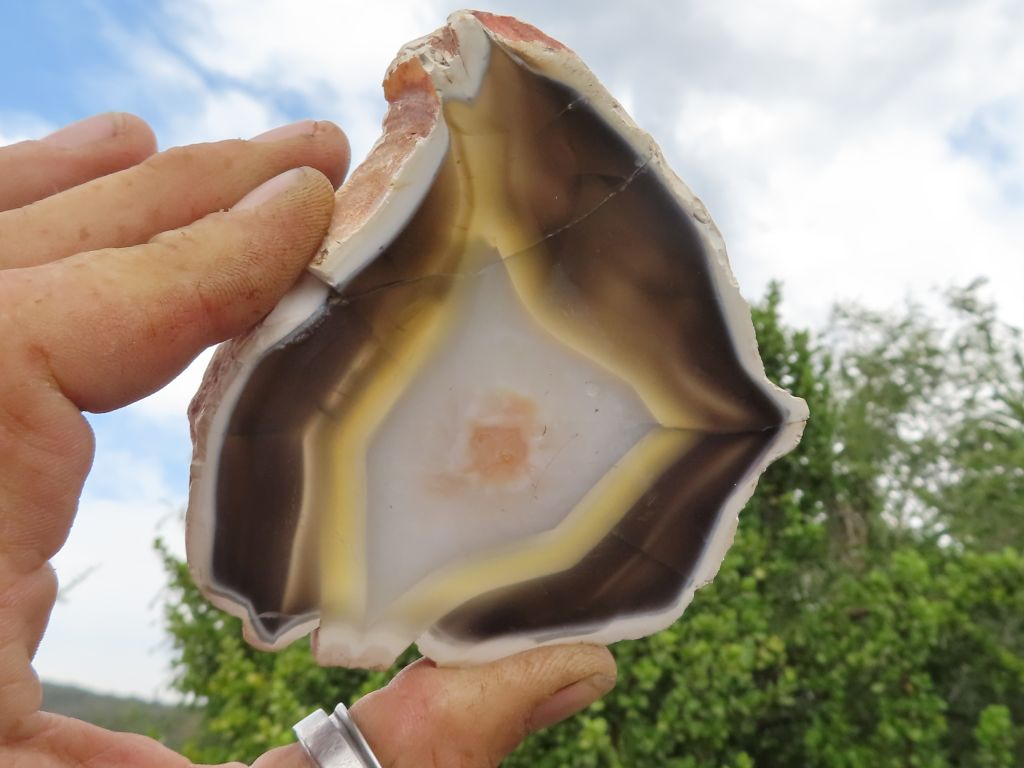 Polished Agate Slices x 5 from Maintirano,Madagascar