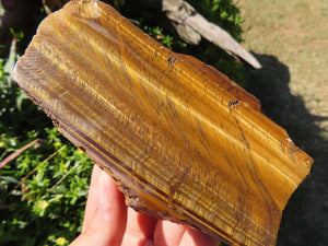 One Side Polished Tigers Eye Slabs x 6 from Prieska, South Africa