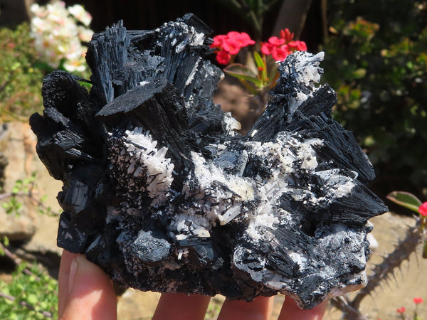 Natural Large Schorl & Foitite Cabinet Black Tourmaline Specimens x 2 from Erongo, Namibia