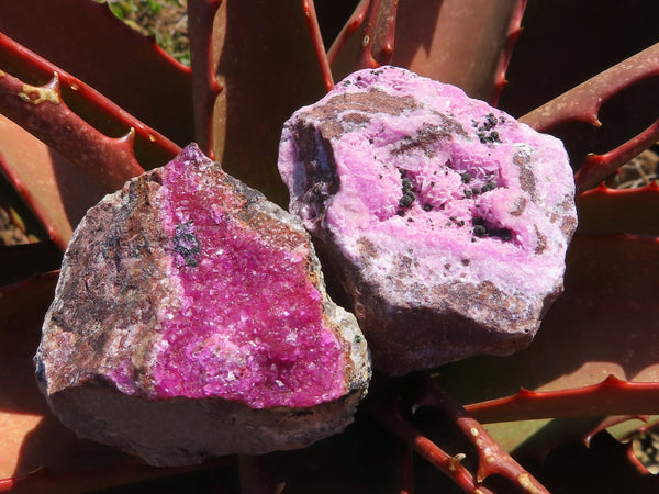 Natural Small to Medium Salrose Cobaltion Dolomite Specimens x 24 from Kakanda, Congo