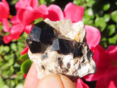 Natural Pyrope Garnet Crystals In Matrix  x 12 from Betrokke, Madagascar