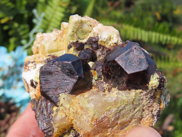 Natural Pyrope Garnet Crystal Specimens x 6 from Betrokke, Madagascar