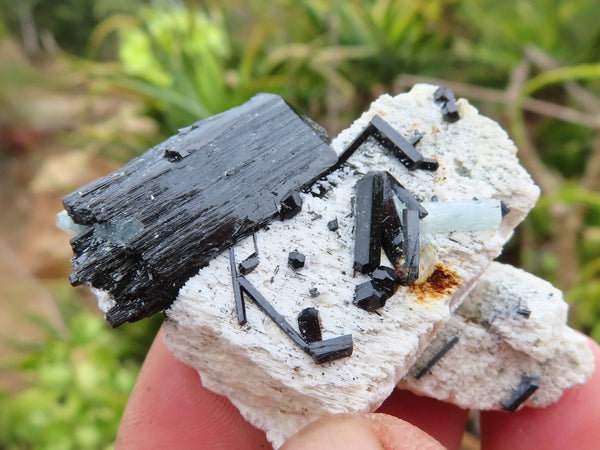 Natural Small Black Tourmaline Cascading Clusters & Terminated Single Crystals Some with Aquamarine x 36 from Erongo, Namibia