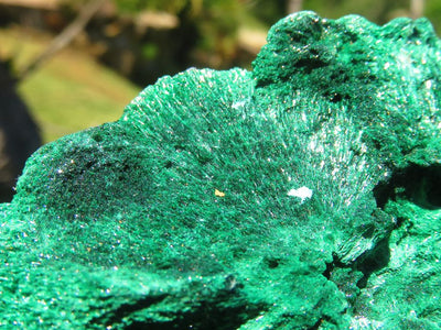 Polished Large Green Opal Standing Freeform Display Pieces x 12 from Madagascar
