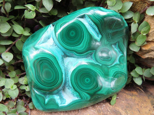 Polished Malachite Specimens x 6 from Congo