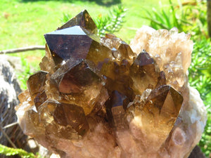 Natural Cascading Smokey Citrine Clusters x 6 From Lwena, Congo