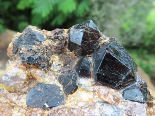 Natural Pyrope Garnet Crystals in Matrix x 6 from Madagascar