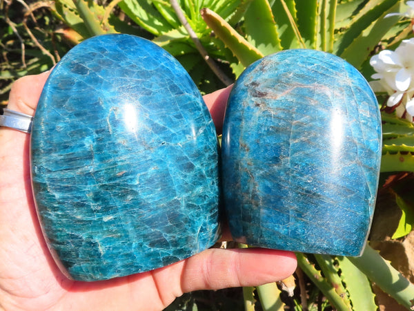 Polished Medium Blue Apatite Standing Free Forms x 2
