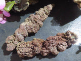 Natural Fossil Coprolite Specimens x 6 from Madagascar