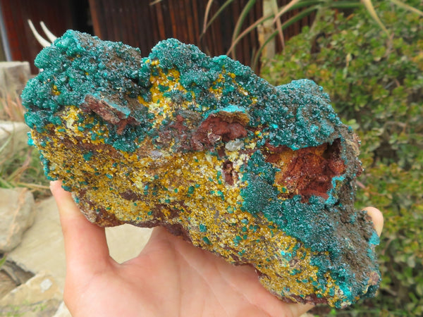Natural Extra Large Dioptase & Wulfenite Bright Emerald Green & Bright Yellow With Copper Residue Coating Specimen x 1 from Brazzaville, Congo - TopRock