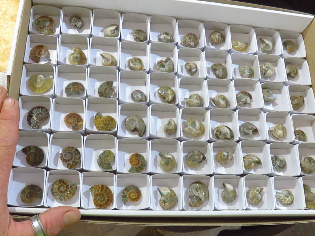 Polished Ammonite Halves and pairs x 60 from Tulear, Madagascar