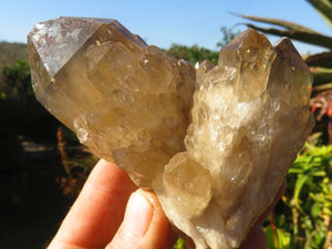 Natural Small Cascading Citrine Clusters x 8 from Lwena, Congo