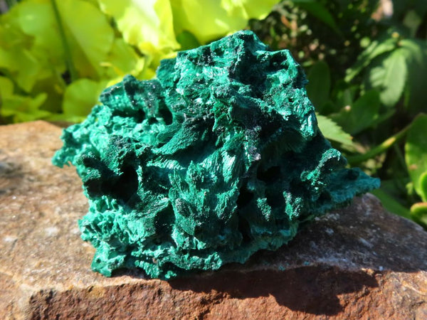 Natural Silky Malachite Crystal Specimens x 6 from Kasompe, Congo