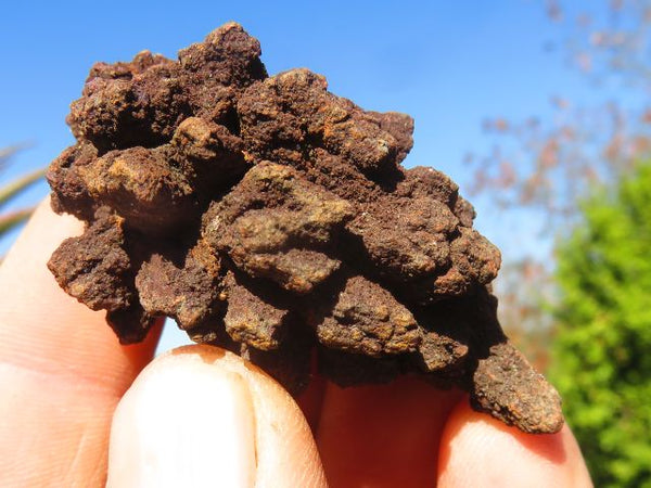 Natural Small Coprolite Limonite Specimens x 24 from Mahajanga, Madagascar