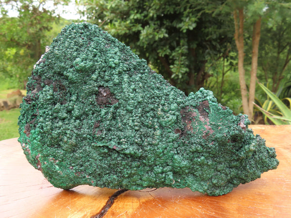 Natural Large Botryoidal Malachite Specimen With Cuprite x 1 From Kolwezi, Congo