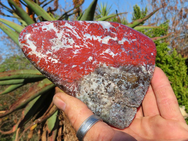 Polished Brecciated Red Flower Jasper Standing Free Forms x 3 from Skeleton Coast, Namibia