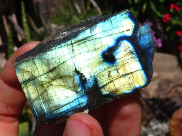 Polished One Side Small to Medium Labradorite Slices x 12 from Tulear, Madagascar