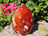 Polished Standing Carnelian Flame x 1 from Madagascar