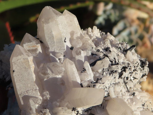 Natural Mixed Labelled Quartz Crystals x 6 from Southern Africa