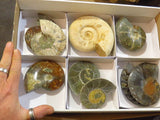 Natural & Polished Mixed Large Ammonites x 6 from Madagascar - TopRock
