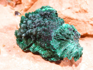 Natural Silky Malachite Specimens x 12 from Kasompe, Congo