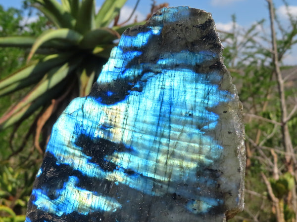 Polished One Side Large Labradorite Slabs x 6 from Madagascar