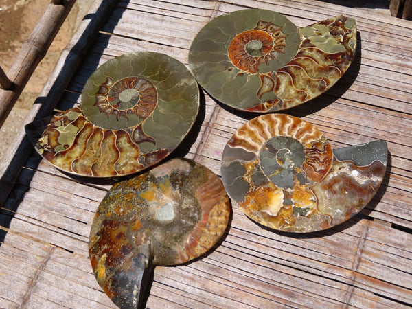 Polished Large Cut & Polished Ammonite Fossil Pairs x Pairs x 2 From Tulear, Madagascar