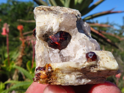 Natural Pyrope Garnet Crystal In Matrix x 12 from Betrokke, Madagascar