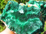 Natural Beautiful Silky Malachite Specimens x 6  from Kasompe, Congo