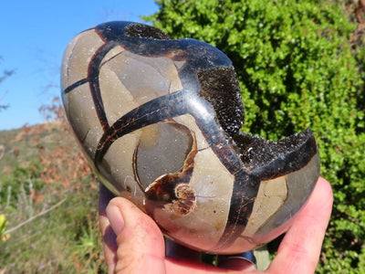 Polished Septeyre Sauvage Dragon Egg x 1 from Mahaganja, Madagascar