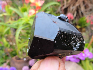 Natural Terminated Black Tourmaline Crystals x 12 from Erongo, Namibia