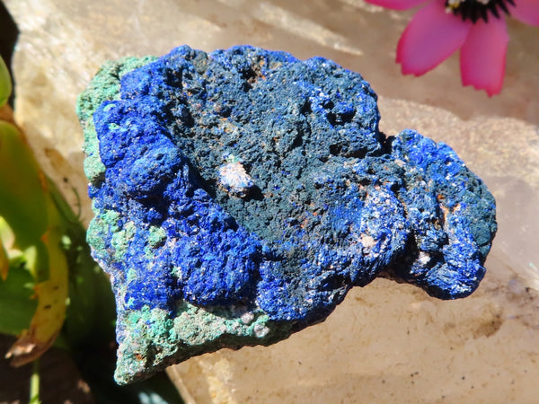 Natural Medium to Large Azurite Nodules x 12 from Jakka Mine, Congo