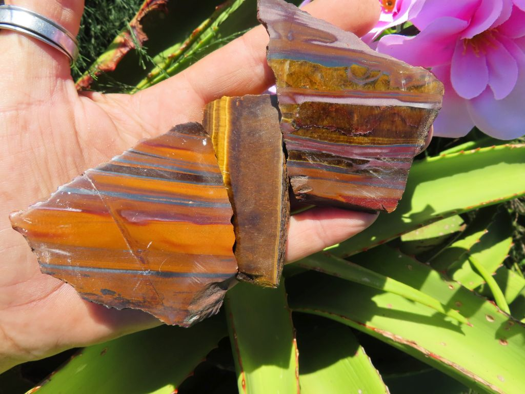One Side Polished Tigers Eye Slices x 15 from Prieska, South Africa