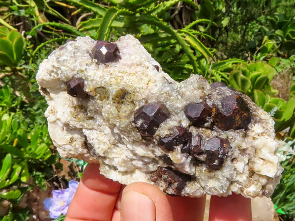 Natural Small to Medium Pyrope Red Garnet Crystal In White Quartz & Feldspar Matrix x 12 from Karibib, Namibia
