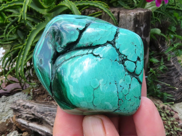 Polished Medium Malachite Free Forms x 12 from Congo