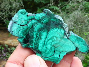 Polished Malachite Slices x 12 from Congo