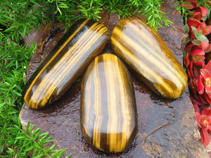 Polished Golden Tigers Eye Freeforms x 12 from South Africa