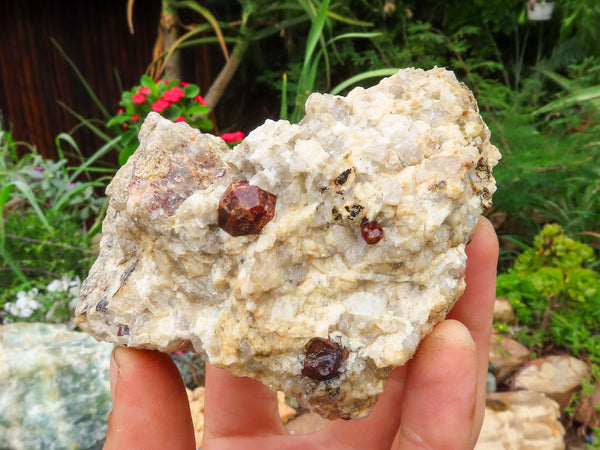 Natural Medium Pyrope Garnet Crystals In Matrix x 6 from Karibib, Namibia