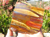 Polished Large Tigers Eye Slices x 6 from Prieska, South Africa